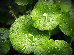 water on leaves after raining